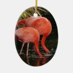 Dos flamencos con las cabezas en el agua ornamento para arbol de navidad