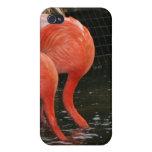 Dos flamencos con las cabezas en el agua iPhone 4 protector
