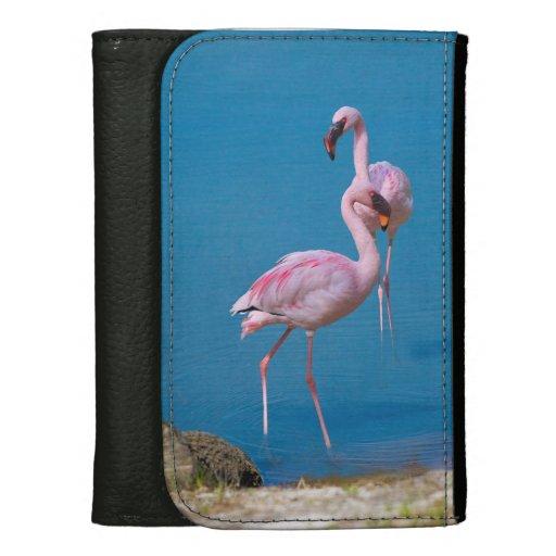 Dos flamencos rosados en agua azul