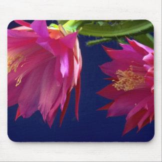 Dos floraciones del cactus de orquídea tapete de ratones