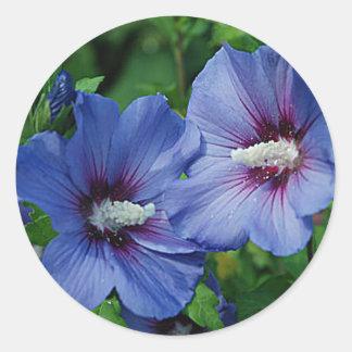 Dos flores azules del hibisco en la planta pegatina redonda