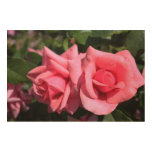 Dos flores color de rosa rosadas perfectas. Foto Impresiones En Madera