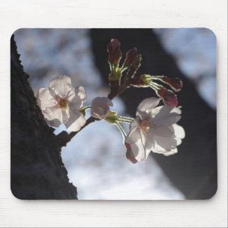Dos flores de cerezo y luces del sol solas alfombrillas de ratón