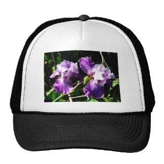 Dos flores púrpuras del iris gorro de camionero