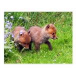 Dos Fox Cubs Postal