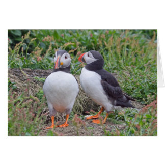 Dos frailecillos de la isla de Skomer Tarjeta De Felicitación