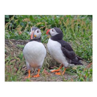 Dos frailecillos de la isla de Skomer Tarjetas Postales