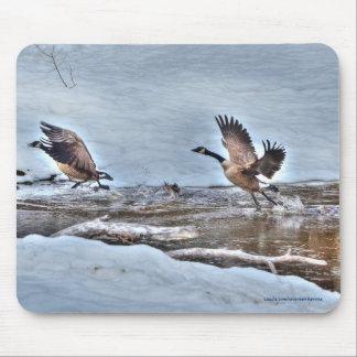 Dos gansos de Canadá y fotos de la fauna de la Alfombrilla De Ratones