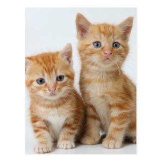 Dos gatitos adorables tarjetas postales
