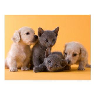 Dos gatitos azules rusos y dos perritos del postales