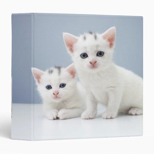 """Dos gatitos blancos muy jovenes miran fijamente carpeta 1 1/2"""""""