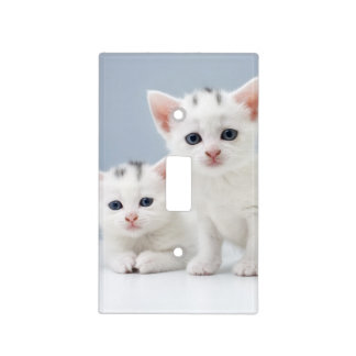 Dos gatitos blancos muy jovenes miran fijamente placas para interruptor