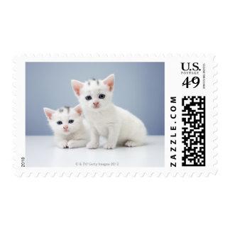 Dos gatitos blancos muy jovenes miran fijamente timbre postal
