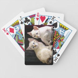Dos gatitos Bobtail del punto del Tabby del Mekong Barajas De Cartas