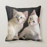 Dos gatitos Bobtail del punto del Tabby del Mekong Cojines