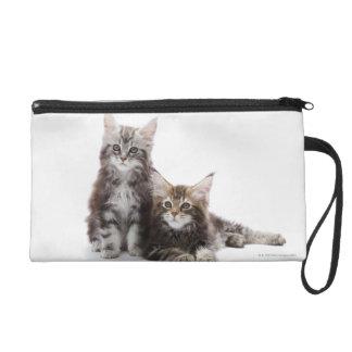 Dos gatitos de gato de coon de Maine