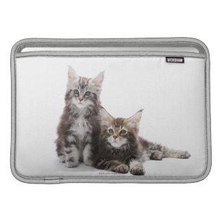 Dos gatitos de gato de coon de Maine Fundas Macbook Air