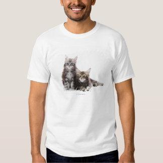 Dos gatitos de gato de coon de Maine Playeras