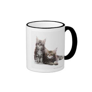 Dos gatitos de gato de coon de Maine Tazas