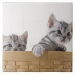 Dos gatitos de Shorthair del americano Azulejo Cuadrado Grande