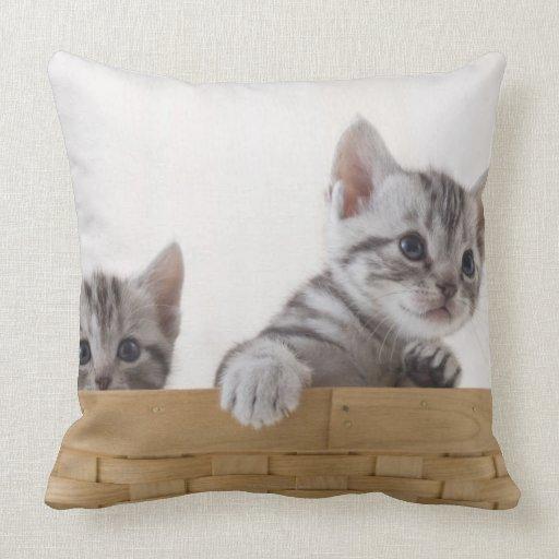 Dos gatitos de Shorthair del americano Cojines
