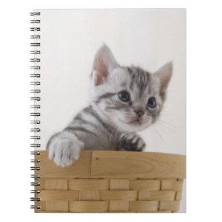 Dos gatitos de Shorthair del americano Libreta