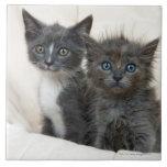 Dos gatitos del tabby azulejo ceramica