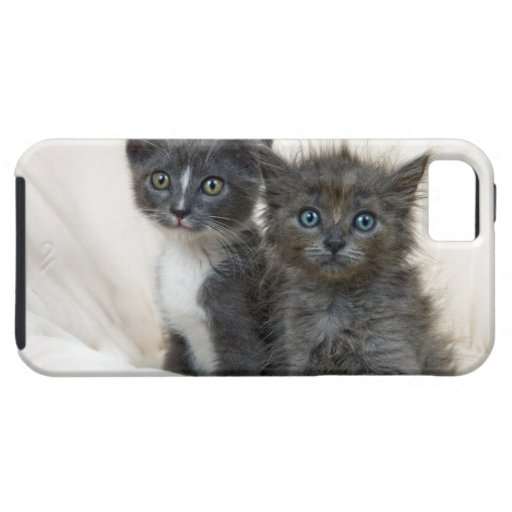 Dos gatitos del tabby iPhone 5 carcasas