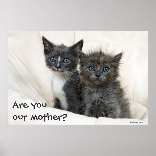 Dos gatitos del tabby póster