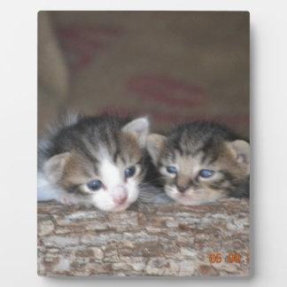 Dos gatitos en registro placas de plastico