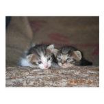 Dos gatitos en registro tarjeta postal
