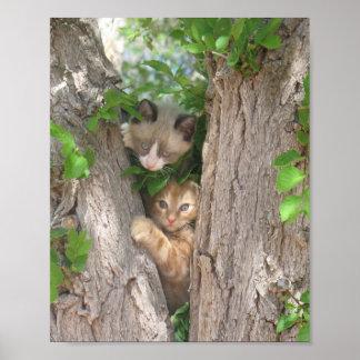 Dos gatitos en un árbol poster