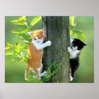 Dos gatitos en un árbol póster