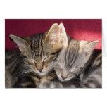 Dos gatitos lindos del Tabby del Coon el dormir Ma