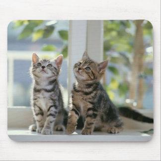Dos gatitos lindos tapetes de ratones