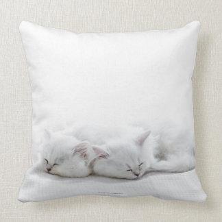 Dos gatitos persas almohada