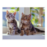 Dos gatitos postales