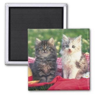 Dos gatitos que se sientan en una manta imán cuadrado