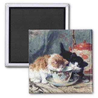 Dos gatitos que tienen la fiesta del té imán cuadrado