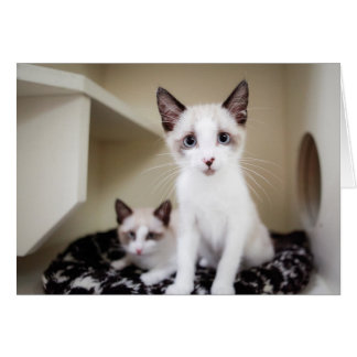 Dos gatitos tarjetas