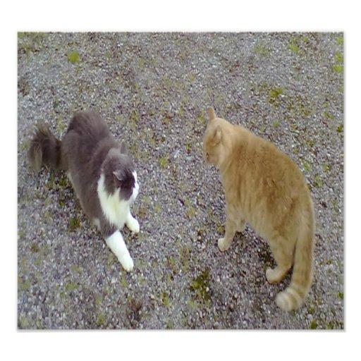 Dos gatos cojinete