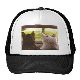 Dos gatos de BFF que miran fuera de la ventana Gorras