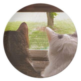 Dos gatos de BFF que miran fuera de la ventana Platos