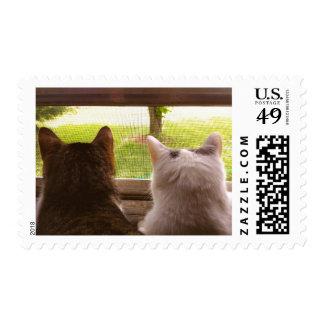 Dos gatos de BFF que miran fuera de la ventana Envio