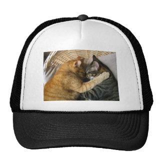 Dos gatos de Tabby el dormir que abrazan Gorros