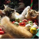 Dos gatos del gatito del navidad, gatitos junto, c escultura fotográfica