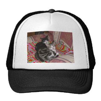Dos gatos en el amortiguador gorras