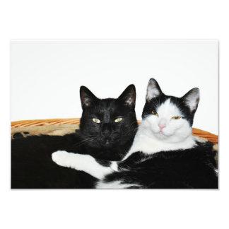 Dos gatos en impresiones de la foto del amor