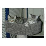 Dos gatos en la propiedad horizontal del gatito tarjeton