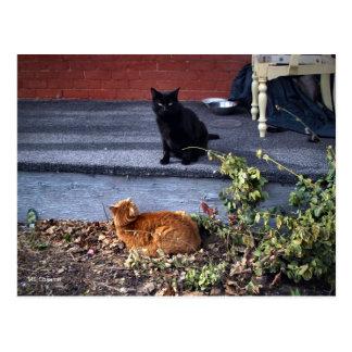 Dos gatos en la yarda postal